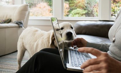 Online Animal or Senior <strong>Pet</strong> Care Course from Holly and Hugo (Up to 89% Off)