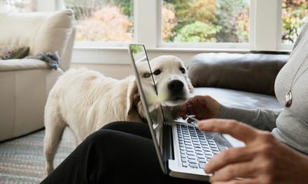Curso online de 150 horas de Entrenamiento del Comportamiento Canino en Centre Of Excellence