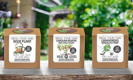 Kit de semillas de diferentes plantas