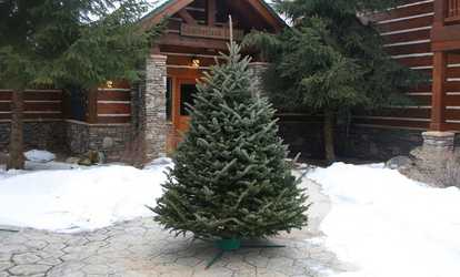 shop groupon pre order fresh cut christmas trees or wreaths w free home delivery - Best Place To Buy Christmas Decorations