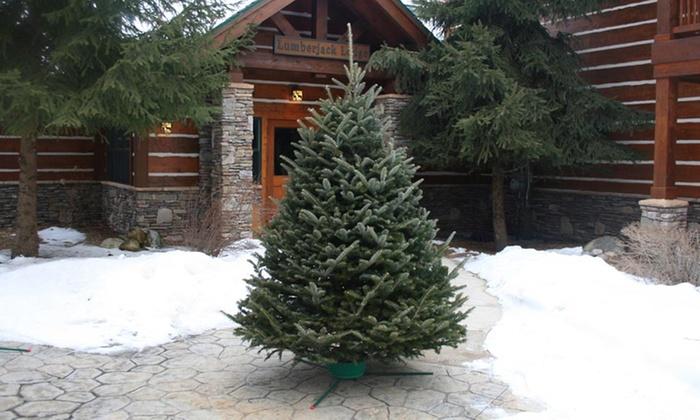 pre order fresh cut christmas trees or wreaths w free home delivery - Pre Decorated Christmas Trees Delivered