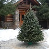 Pre-Order: Fresh Cut Christmas Trees or Wreaths w/ Free Home Delivery