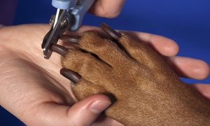 Puparazzi Pet Spa: $5 for $10 Worth of Services — Puparazzi Pet Spa