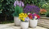 Collection of 100 or 200 Mixed Flowering Bulbs