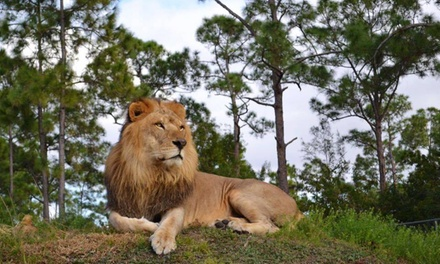 $25 for Single-Day Admission for One with Parking to Lion Country Safari ($48.15 Value)