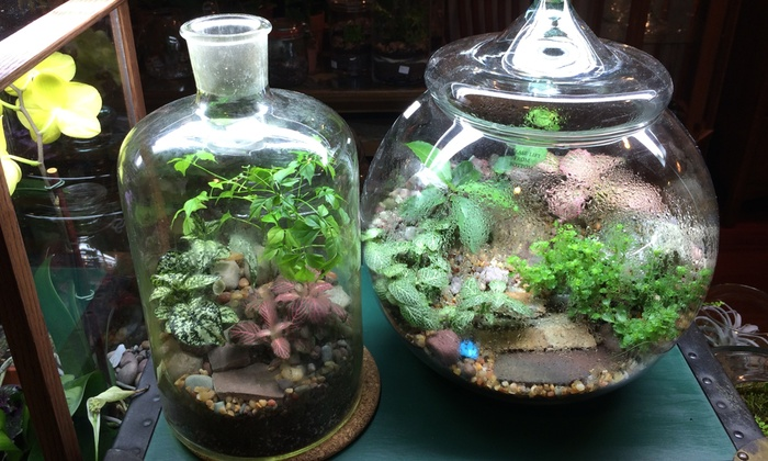 Roosevelts Terrariums - Roosevelts Terrariums: Build-Your-Own-Terrarium Class for One, Two, or Four at Roosevelts Terrariums (Up to 50% Off)