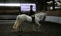 90-Minute Indoor Horse Riding Lesson at HorseScotland Award-Winning Tannoch Stables (Up to 61% Off)