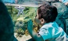Adult or Child General Admission to SEA LIFE at Mall of America