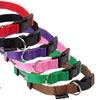 Bunty Dog Collar