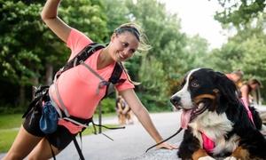 Kinovie: Forfait d'essai ou illimité de cours de Cardio-Canin ou Cani-Marche avec Kinovie (jusqu'à 56 % de rabais)