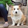 48% Off Doggie Daycare at Dogtown Cincinnati