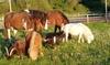 Kuschelstunde mit dem Pony