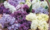Scented Lilac Trio Collection