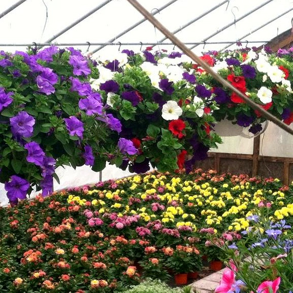 Plants And Gardening Supplies Perreault Nursery Groupon