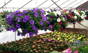 Perreault Nursery: $17 for $30 Worth of Plants and Gardening Supplies at Perreault Nursery in Grafton