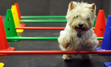 Sesión de peluquería para un perro o tratamiento spa a elegir para perros y gatos desde 19,95 € en Lavacan Express Spa
