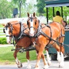 Up to 27% Off Admission to Kentucky Horse Park