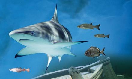 Zwemmen met haaien bij Deltapark Neeltje Jans in Vrouwenpolder, Zeeland