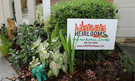 $50 for $90 Worth of Gardening Services — Urban Heirlooms
