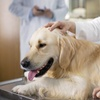 55% Off Annual Vaccination for a Dog