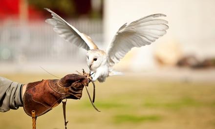 Rutland Falconry and Owl Centre