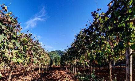 Paseo por el viñedo, visita enológica, la bodega y cata de vinos para 2, 4 o 6 personas desde 19,99 € en Can Roda Bodega