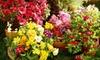 Nixa Hardware and Seed Co - Nixa: $10 for $20 Worth of Plants and Garden Supplies at Nixa Hardware & Seed Co