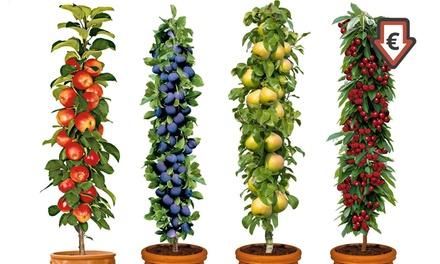 1 ou 2 lots de 4 arbres fruitiers hauteur 60 70cm