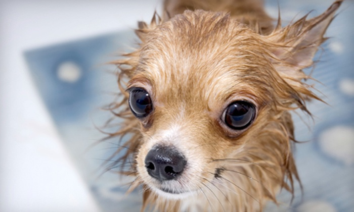 Great Neck Dog & Cat Hospital - Garden City Park: Bath for a Small, Medium, or Large Dog at Great Neck Dog & Cat Hospital (Up to 54% Off)