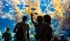 Up to 20% Off Admission to Birch Aquarium