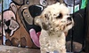 Town house for dogs - Fairfield County : 3- or 5-Day Dog Daycare at Town House for Dogs (Up to 49% Off)