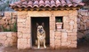 Up to 52% Off Doggie Daycare from Autumn the Dog Trainer