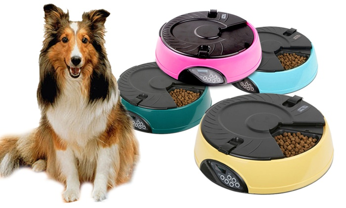 Up To 48% Off Six-Portion Automatic Pet Feeder | Groupon