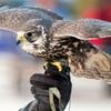 Hawk or Owl Walk Experience