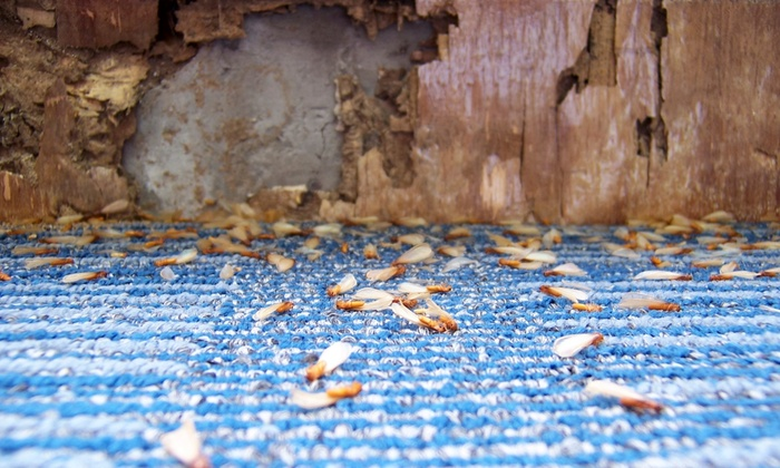 Arrow Termite and Pest Control - Houston: Sentricon Termite Treatment for Homes up to 4,000 sq. ft and 400 linear ft from Arrow Termite and Pest Control