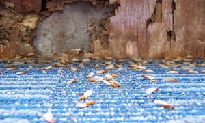 Termkon Pest Elimination: $69 for $125 Worth of Pest-Control Services — Termkon Pest Elimination