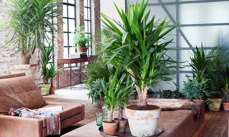 Set de 4 palmeras de interior