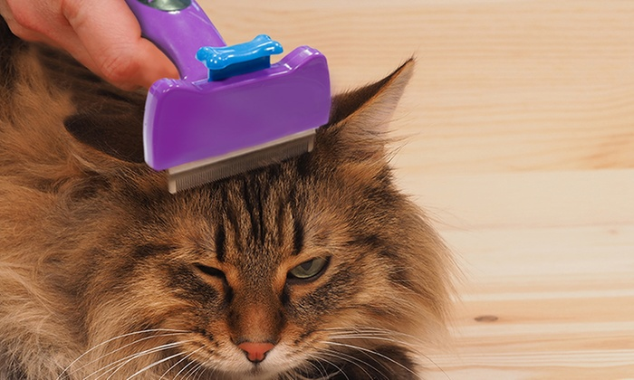 jusqu 39 75 brosse tondeuse pour poils de chats groupon. Black Bedroom Furniture Sets. Home Design Ideas