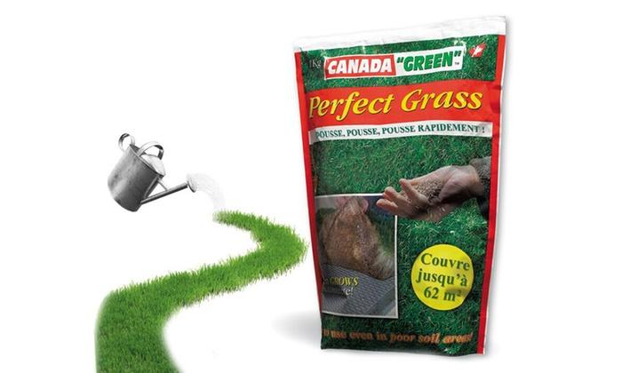 Sementi da prato Perfect Grass