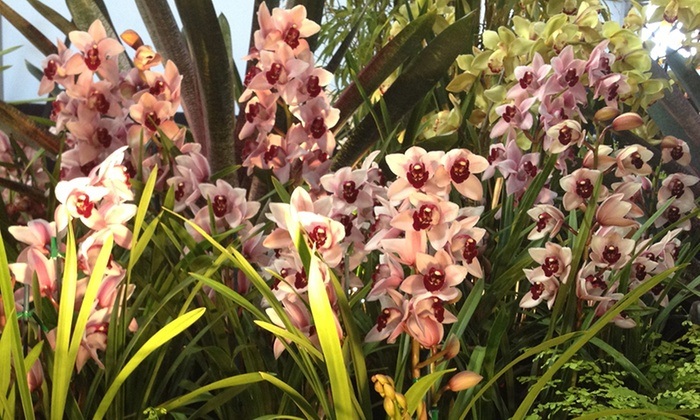 Up to 47% Off Admission to Pacific Orchid Exposition