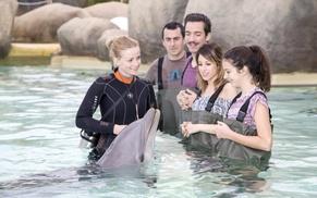 Marineland Lagoon: Entrée au choix du 1 juillet au 3 septembre 2017, option rencontre avec les dauphins dès 49,90 € à Marineland Lagoon
