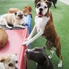 Up to 48% Off Doggie Day Camp at Centinela Feed & Pet Supplies