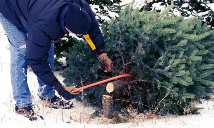 Bosch Nursery - Bosch Nursery: $25 for a Self-Cut Spruce Christmas Tree at Bosch Nursery ($49 Value)