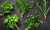 Erbe aromatiche - E-Careers: Videocorso sulle erbe aromatiche per imparare a coltivarle ed utilizzarle più certificazione con E-Careers (sconto 91%)