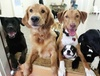 36% Off Doggy Day Camp at Best Friends Pet Hotel