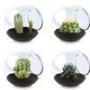 Tiny Terrariums- Assorted Cacti 3-Pack