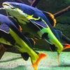 Entrée au choix à l'Aquarium des Tropiques