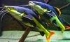 Aquarium Des Tropiques - Allex: 1 entrée enfant ou adulte dès 4,50 € pour L'Aquarium des Tropiques