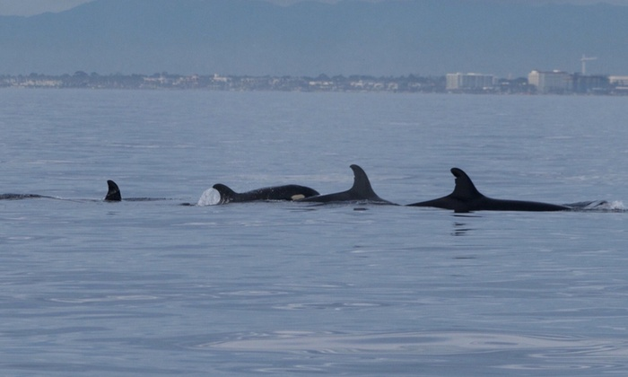 Up To 55 Off Whale And Dolphin Watching Max 6 Pengers
