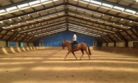 Horse Riding: One ($39) or Five Private or Group Lessons ($149) at Wellington Indoor Riding School (Up to $350 Value)